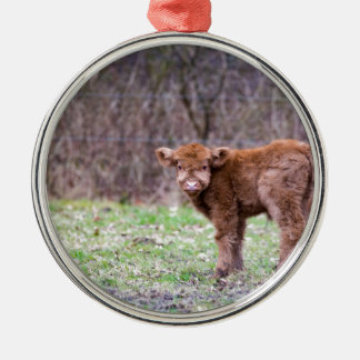 Brown scottish highlander calf in meadow Silver-Colored round ornament