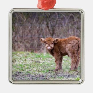 Brown scottish highlander calf in meadow Silver-Colored square ornament