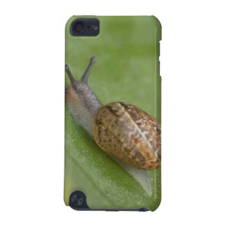 Brown snail on dew covered leaf iPod touch (5th generation) cover