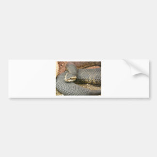 brown snake bumper sticker