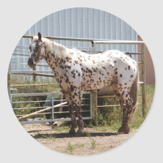 Brown spotted Appaloosa horse Sticker