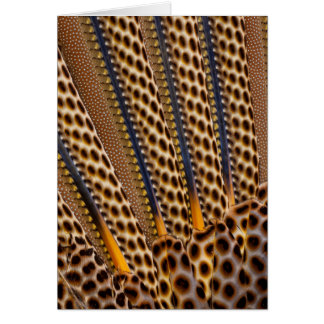 Brown spotted pheasant feather card