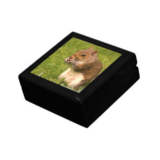 Brown Squirrel  Gift Box