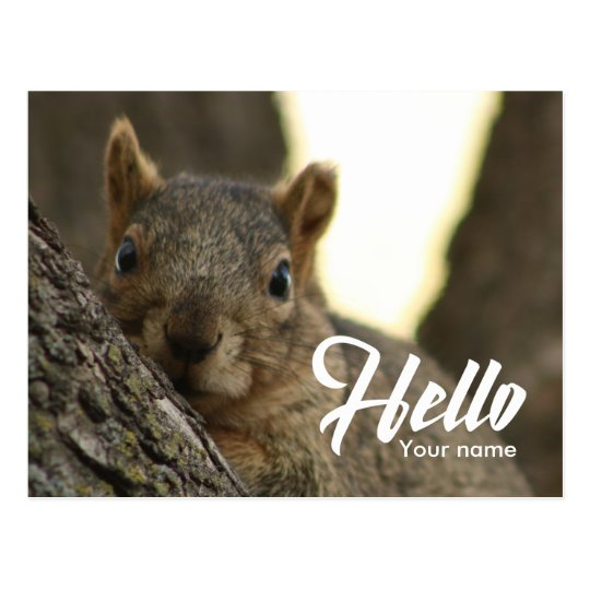 Brown squirrel photo funny cute hello postcard
