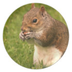 Brown Squirrel Plate