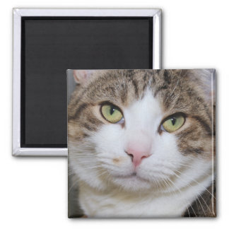 BROWN TABBY AND WHITE CAT SQUARE MAGNET