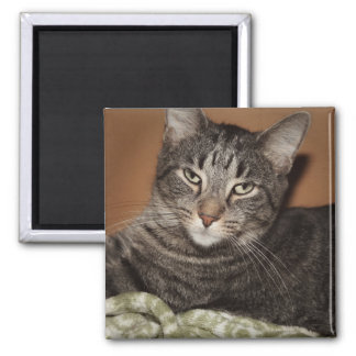 BROWN TABBY CAT MAGNET