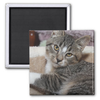 BROWN TABBY KITTEN MAGNET