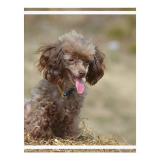 Brown Toy Poodle Letterhead