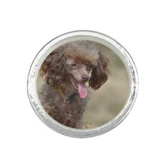 Brown Toy Poodle Ring