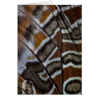 Brown tropical butterfly close-up card