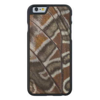 Brown tropical butterfly close-up carved® maple iPhone 6 slim case
