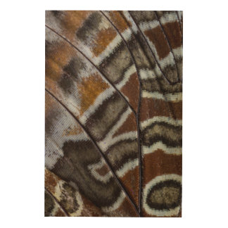 Brown tropical butterfly close-up wood canvas