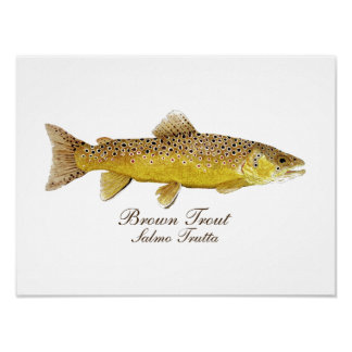 Brown Trout Art Poster