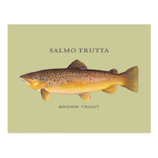 Brown Trout fish with vintage illustration Postcard