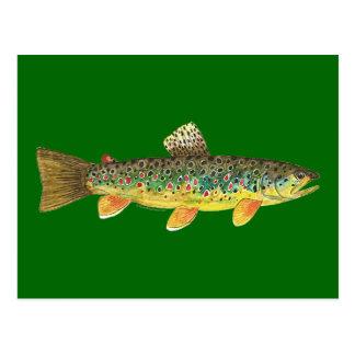 Brown Trout Fishing Postcard