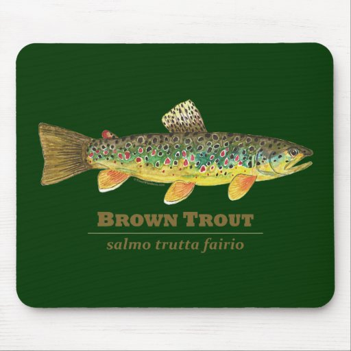 trout asian singles When dough baits are used, a treble hooks will hold the bait longer than single hooks and require less baiting smaller hooks (6, 8, 10, or 12.