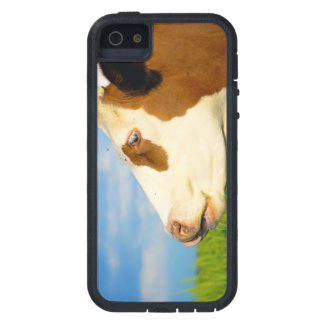 Brown white cow looking straight ahead case for iPhone 5/5S