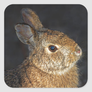 Brown Wild Bunny Rabbit in Sunlight Square Sticker