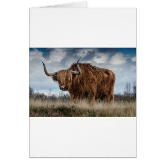Brown Yak on Green and Brown Grass Field Card