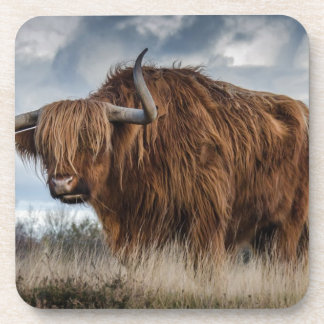 Brown Yak on Green and Brown Grass Field Coaster