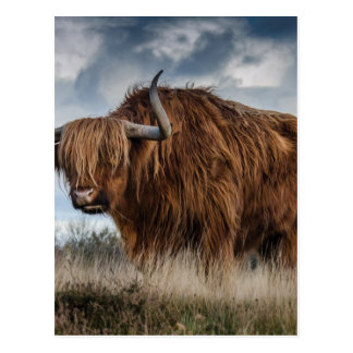 Brown Yak on Green and Brown Grass Field Postcard