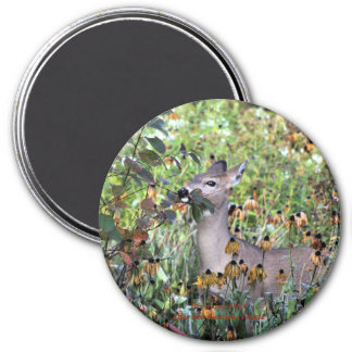 Browsing Deer After the Gardens Freeze Magnet