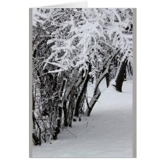 Brrrr - Snowy Locust Trees - Greeting Card