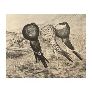 Brunner Pouter Pigeons Wood Print