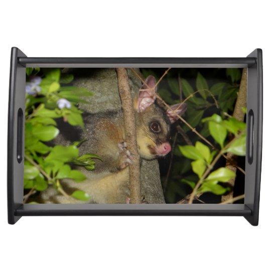 Brushtail Possum Service Trays