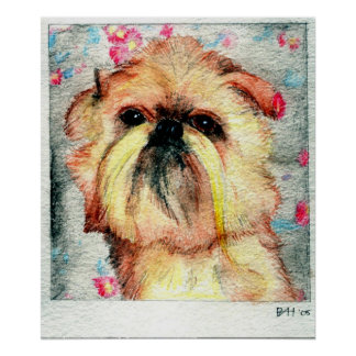 Brussels Griffon Dog Portrait Poster