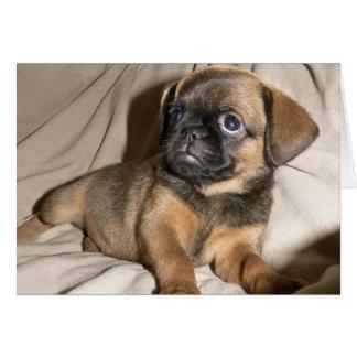 Brussels Griffon Puppy! Card