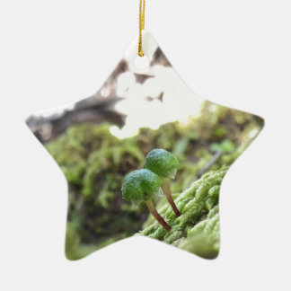 Bryophyta Umbrellas Ceramic Star Ornament