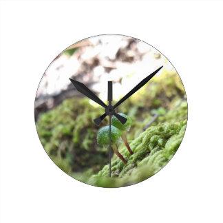 Bryophyta Umbrellas Clocks