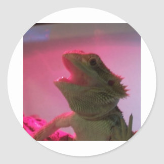Bubba The Bearded Dragon Round Sticker