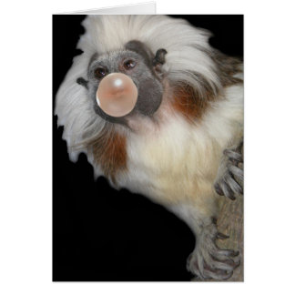 Bubble Blowing Marmoset Card