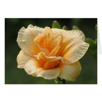 Bubbly - Daylily Card