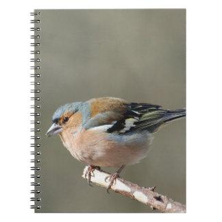 Buchfink - photo: Jean Louis Glineur Spiral Notebook