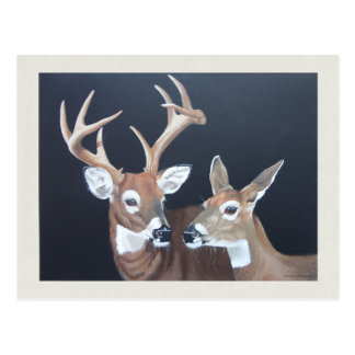 Buck and Doe Whitetail Deer Painting Postcard