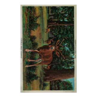 Buck Deer at Yosemite National Park Posters