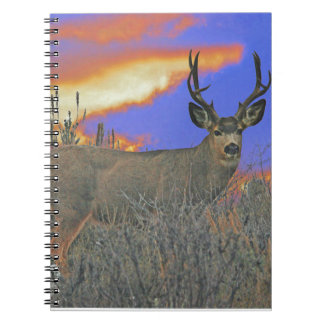 Buck deer sunrise notebooks