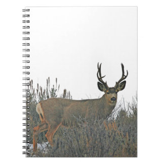 Buck deer w notebook
