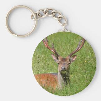 Buck fallow deer in grass basic round button keychain
