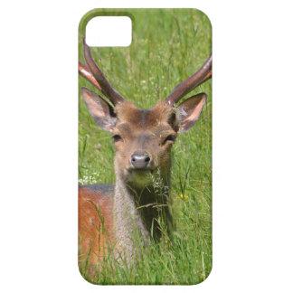 Buck fallow deer in grass iPhone 5 case