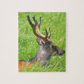 Buck fallow deer in grass jigsaw puzzle