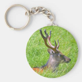 Buck fallow deer in grass keychain
