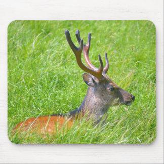 Buck fallow deer in grass mouse pad