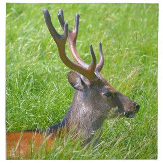 Buck fallow deer in grass napkin
