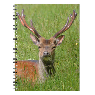 Buck fallow deer in grass spiral note book
