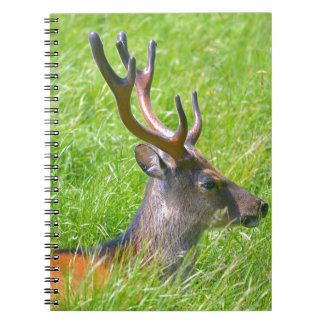 Buck fallow deer in grass spiral notebook